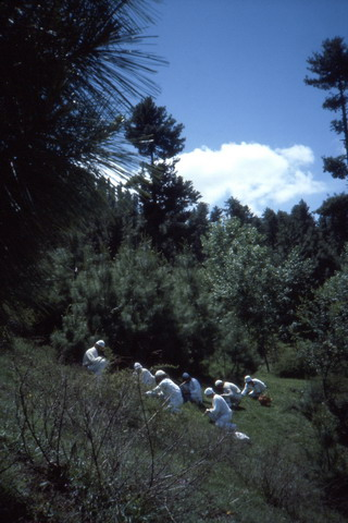 Herbal course in Kokarnag, 2.020 m.
